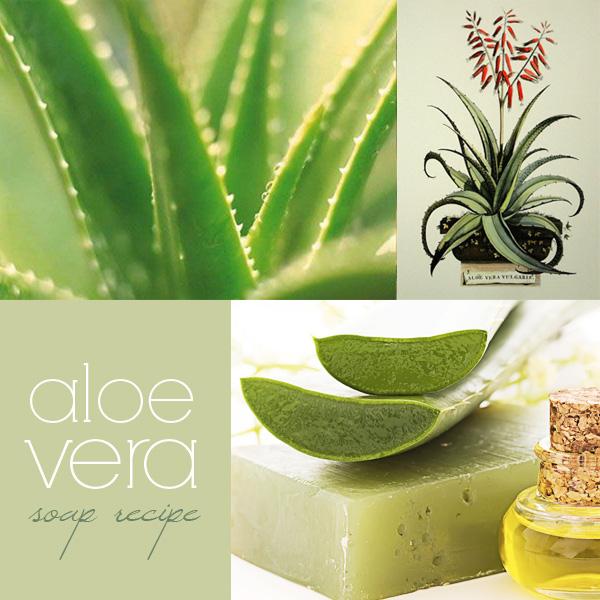 aloe-vera-soap-recipe1  soaprecipes101