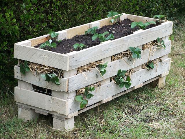 strawberry-pallet-planter