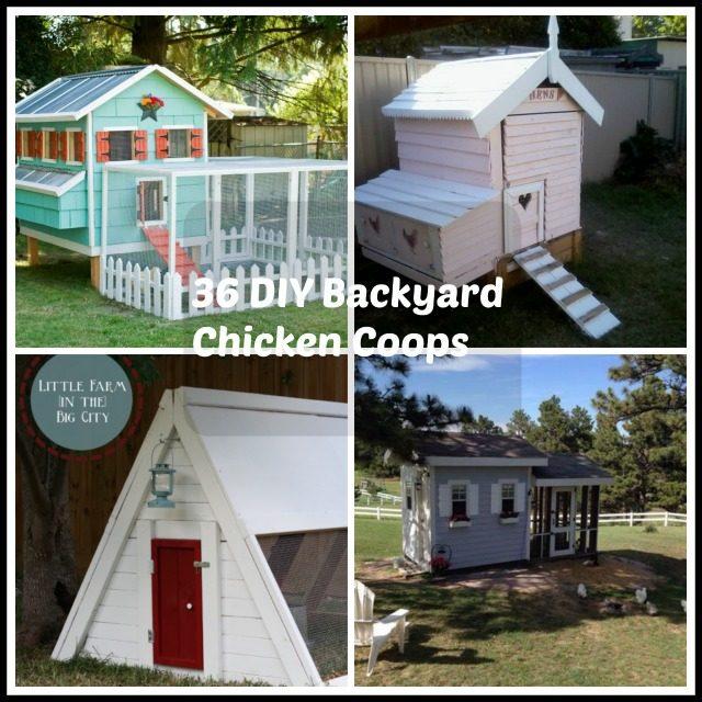 BackyardChickenCoops