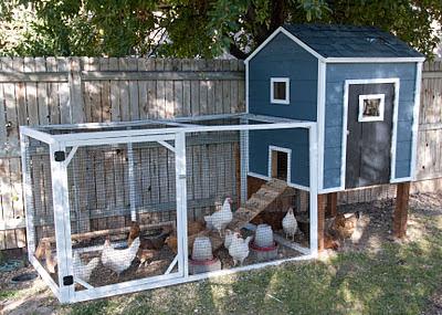 Build Your Own Chicken Coop