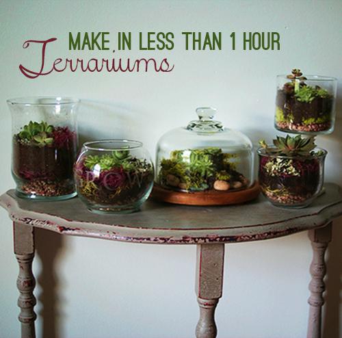 Make Terrariums Galore in Under 1 Hour