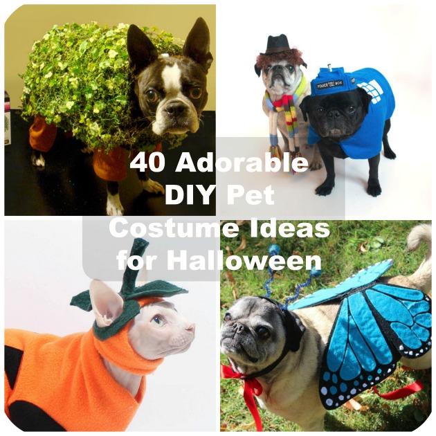 293e0fa8290 40 Adorable DIY Pet Costume Ideas for Halloween